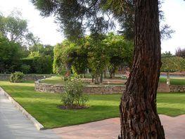 Jardín - Chalet en venta en calle Trece, Escorial (El) - 316755358
