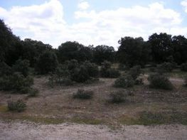 Terrain de vente à paseo De Platanos, Velayos - 13771007