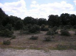 Terreny en venda paseo De Platanos, Velayos - 13771007