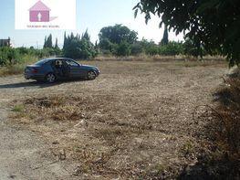 Foto - Terreno en venta en calle Otras, Alguazas - 280799782
