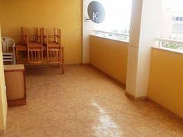 Foto - Apartamento en alquiler en calle Torreblanca, Torrelamata - La Mata en Torrevieja - 305712684