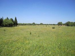 Land for sale in Campos - 361164554