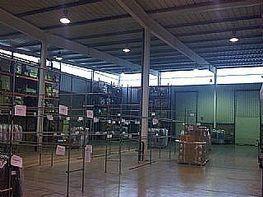 Nave industrial en alquiler en calle Sant Esteve Sesrovires, Sant Esteve Sesrovires - 144248015
