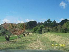 Terreny industrial en venda Sant Pere de Riudebitlles - 195076132