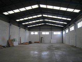 Foto - Nave industrial en alquiler en calle Tres Hemanas, Aspe - 248441210