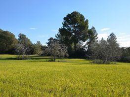 Grundstück in verkauf in pasaje Son Boivas, Montuïri - 249997871
