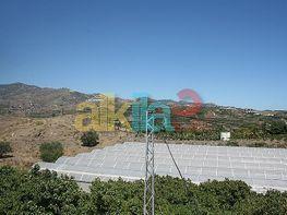 Foto1 - Estudio en alquiler en Vélez-Málaga - 310951966