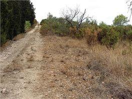 Grundstück in verkauf in Benicarló - 324584202