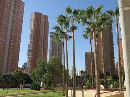 Imagen sin descripción - Apartamento en venta en Levante en Benidorm - 345233149