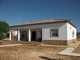 Fachada - Chalet en venta en carretera Moron Marchena, Morón de la Frontera - 311828386