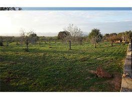 Terreny en venda Sineu - 405198464