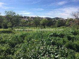 Grundstück in verkauf in calle Cami Des Putxet, Palma de Mallorca - 409003951
