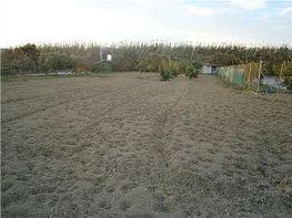 Grundstück in verkauf in carretera Vélez a Trapiche, Floridablanca in Vélez-Málaga - 326259134