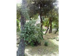 Terreno en venta en calle Les Vinyes, Sant Cebrià de Vallalta - 326314684