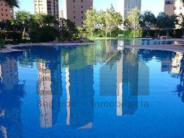 Piscina y zona verde - Apartamento en venta en calle Avenida Marina Baixa, Benidorm - 328092706