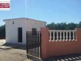Foto - Finca rústica en venta en calle Forn de Carrascosa, Alzira - 328587769