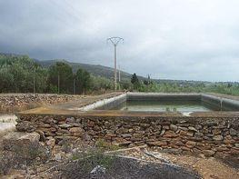 Terreny en venda Alcanar - 335942286