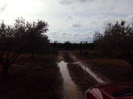 Land for sale in calle La Borralla, Villablanca - 345132024