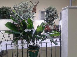 Piso en alquiler en calle Jesus Gran Poder, San Lorenzo en Sevilla