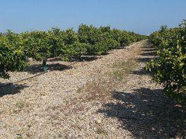 Grundstück in verkauf in Vinaròs - 398274312