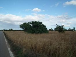 Land for sale in carretera Militar, Campos - 43691122
