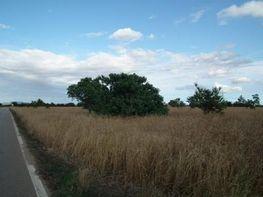 Terreno en venta en carretera Militar, Campos - 43691122