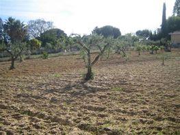 Solar en venta en Olivares - 388967778