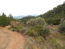 Finca rústica en venta en vía Serra de Pandols, Pinell de Brai, El - 128379408