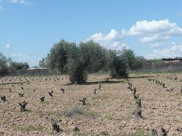 Grundstück in verkauf in Villa del Prado - 293508760