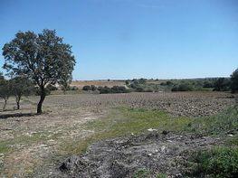 Grundstück in verkauf in Villa del Prado - 293508805