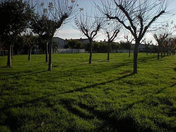 DSCN0601 - Apartamento en venta en Torredembarra - 137137410