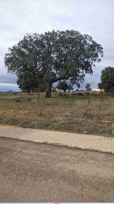 SOLAR5 - Terreno en alquiler en calle Zorita de Valverdon, Almenara de Tormes - 370029609