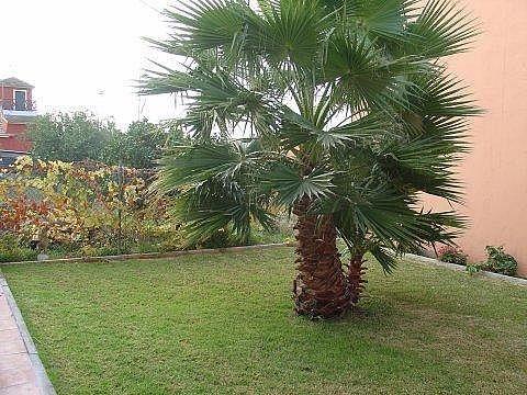 Chalet - Chalet en alquiler en Sanlúcar de Barrameda - 300544898